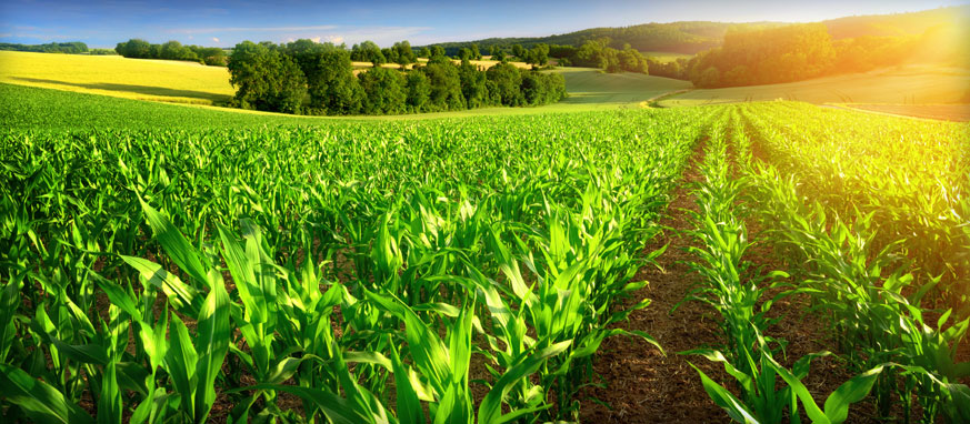 FG inaugurates $1bn National Agric Mechanisation Committee - the programme which, the programme, the minister, Minister, mechanisation, local government areas, Committee