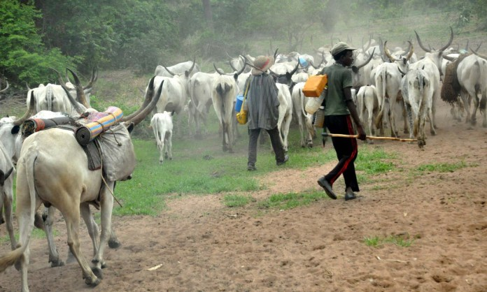 Ugheli residents protest alleged herdsmen killing of an indigene - the council boss, the armed herdsmen, protest, ogor community, killing, Herdsmen, edjekota ogor