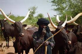RUGA: Southern leaders demand prosecution of northern youth leaders - youth leaders, the southern nigeria, the federal government, Southern, ruga, Leaders, ethnic nationalities